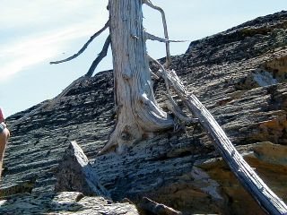P6230011 tree in rock